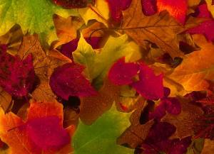 fall-in-love-leaves-3